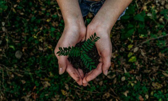 que-vision-tiene-un-ceo-sobre-la-sostenibilidad-en-la-estrategia-empresarial